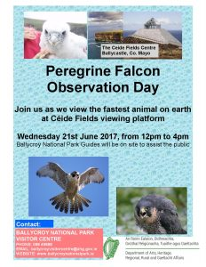 Peregrine Falcon Observation Day 2017