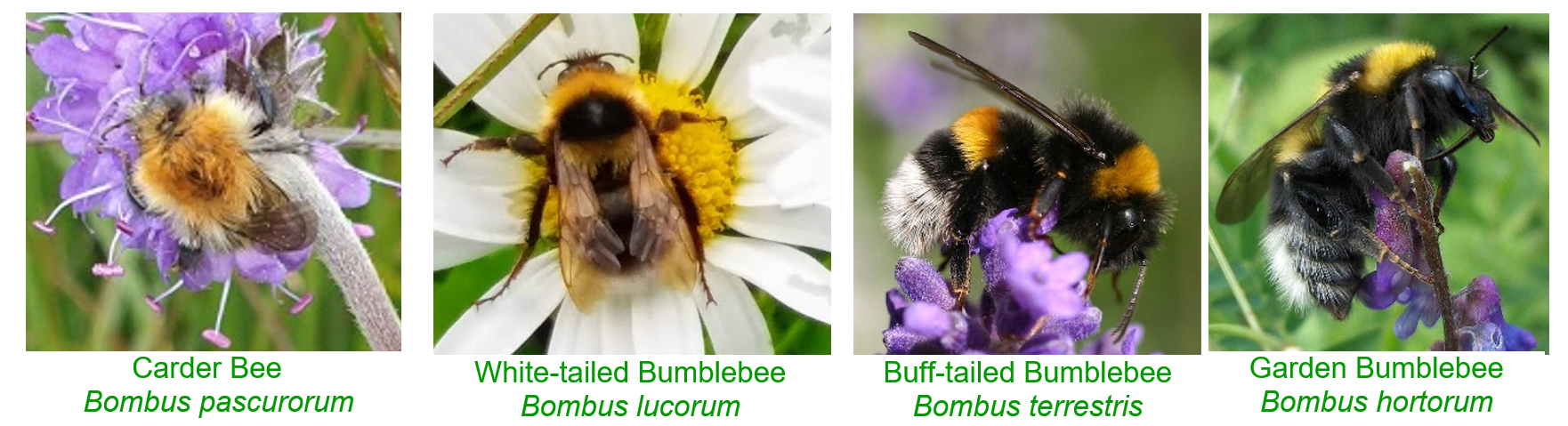 Different Bees